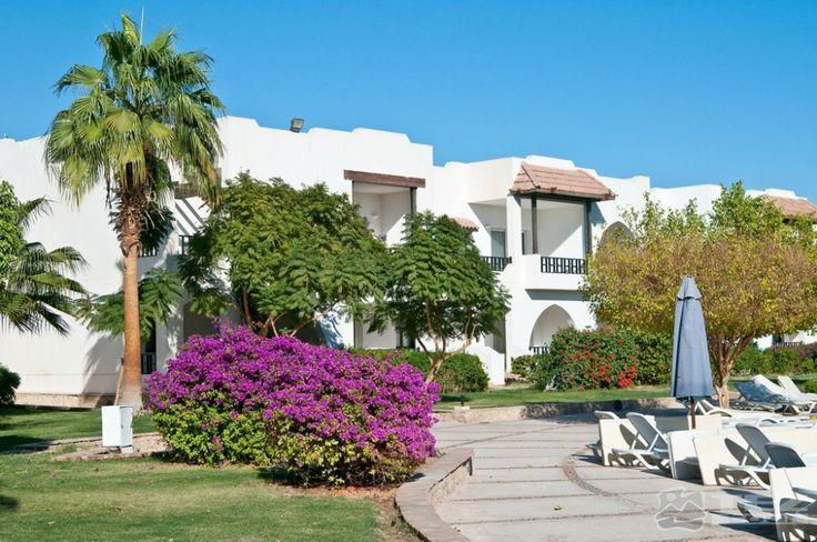 #Отель Poinciana Sharm Resort ⭐⭐⭐⭐ #Египет, Шарм-Эль-Шейх