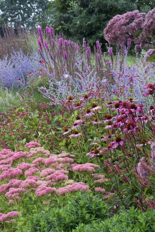 Perovskia 'Blue Spire', Echinacea purpurea 'Rubinstern' syn. Rudbeckia purpurea (Rudbeckia pourpre), Sedum 'Autumn Joy' syn. Sedum 'Herbstfreude' (Orpin), Lythrum 'Fire Candle' (Salicaire), Eupatorium purpureum (Eupatoire). Designer, s