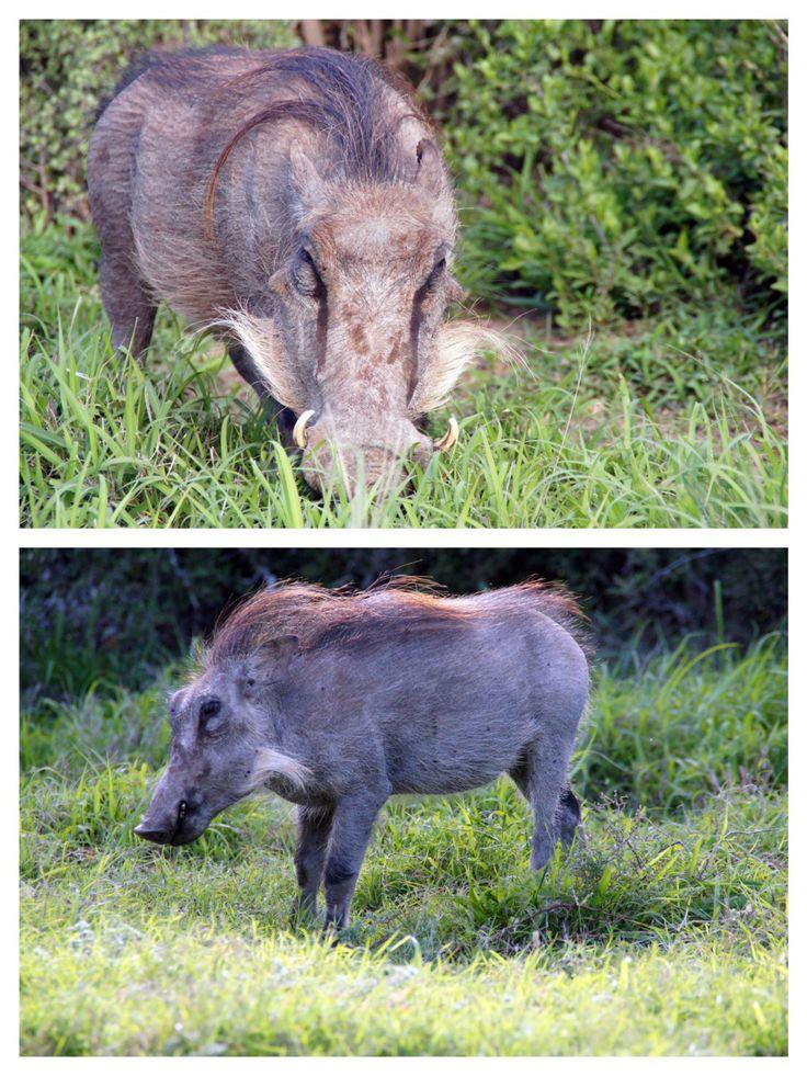 Addo National Park Südafrika
