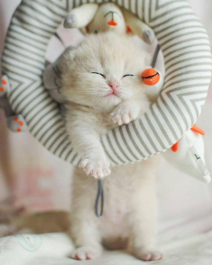 Sleeping Kitty ~ even hanging up!