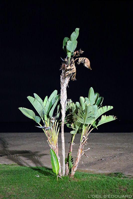 Photographie d'arbre plante bananier de nuit night beach plage playa malagueta Malaga Espagne