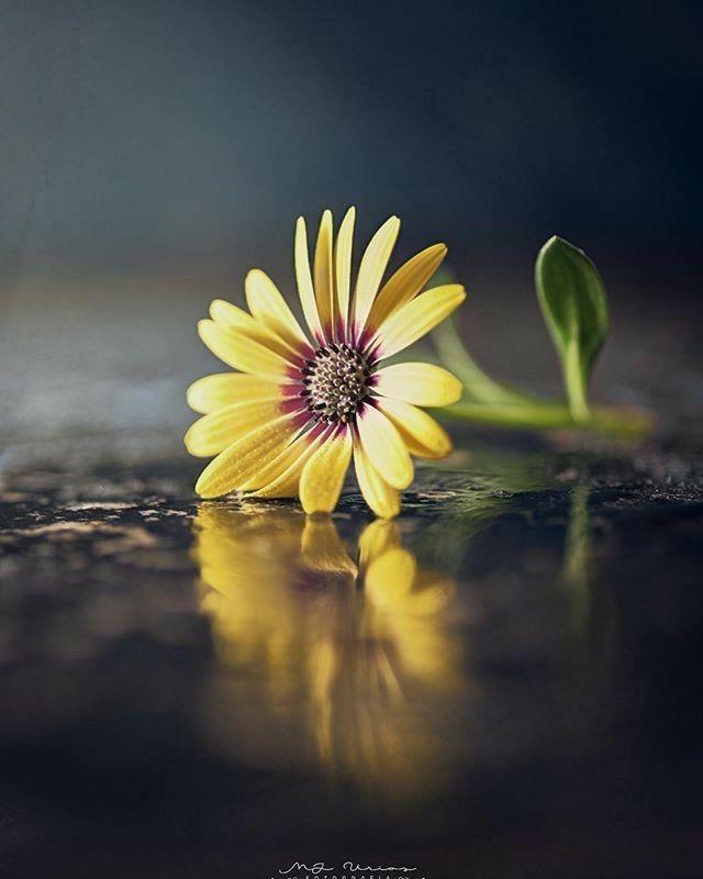Pin By Bijibinu On Fotografi Best Flower Wallpaper Beautiful Nature Wallpaper Nature Photography