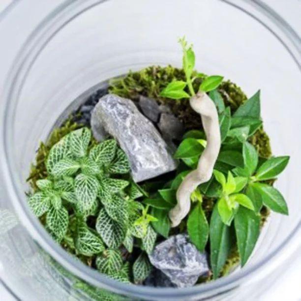 Флорариум, или небольшая домашняя оранжерея | Общий 18 Элемента