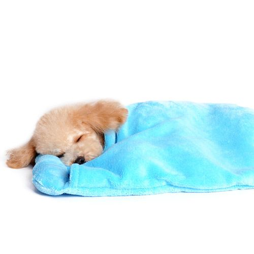 Blanket Pet Bed :: Blue - $36.00