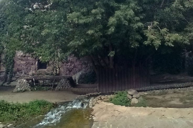 #Travel #tour #Zoo (128)