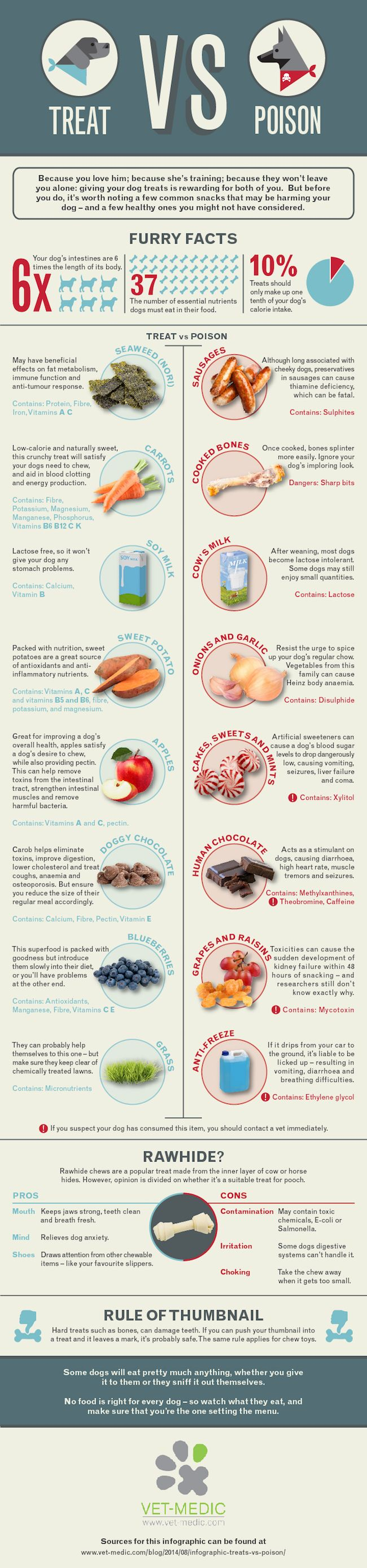 Infographic of good foods and bad foods for dogs. Carrots, apples and blueberries- good! Grapes, onions, garlic and chocolate - bad!