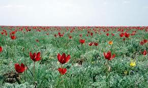 казахская степь весной - Поиск в Google