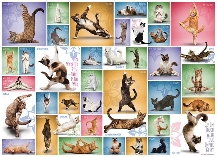 Yoga Cats. Discover some of the basic yoga positions with the help of your purring friends. Strong high-quality puzzle pieces. 1000 pieces.