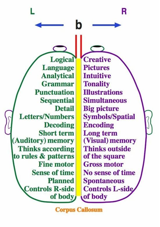 Right brain / Left brain Find activities to exercise and stimulate each side of the brain.