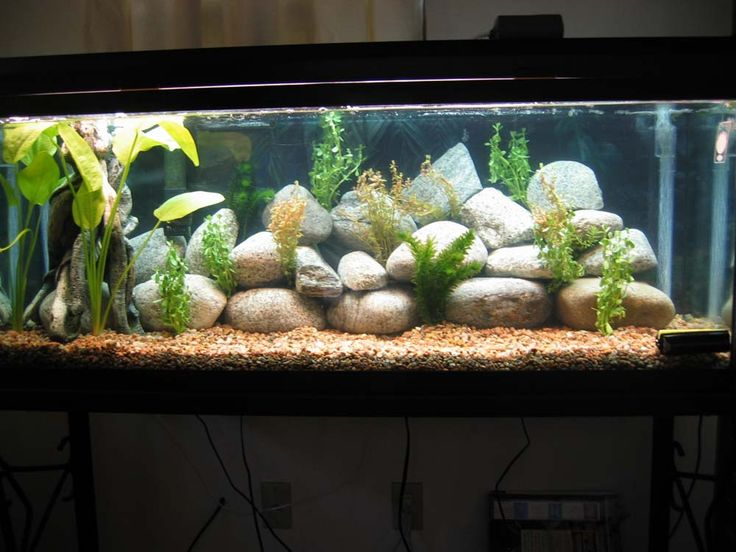 201 best images about aquarium setups on pinterest for Aquarium decoration idea