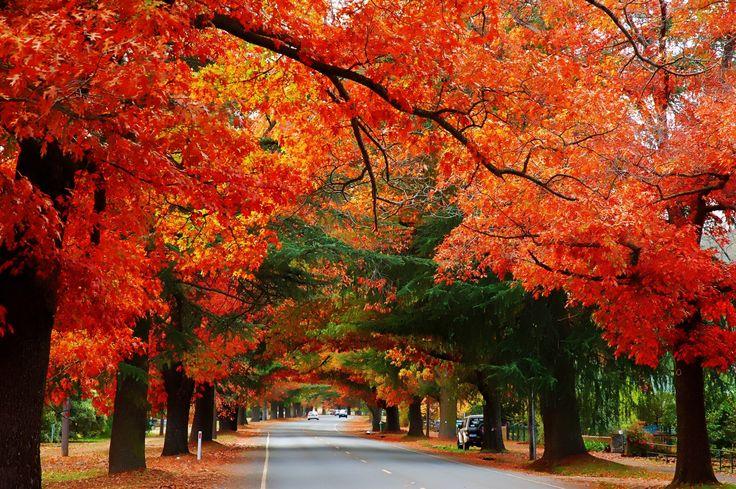 Bright Autumn in Australia