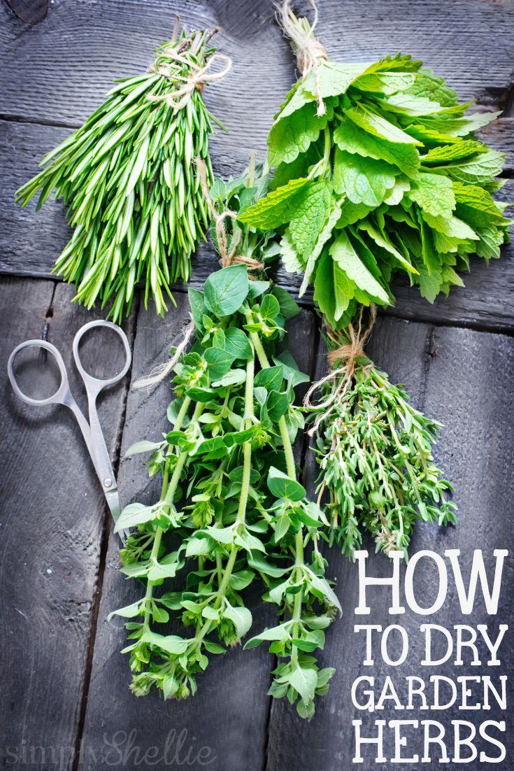 A step-by-step tutorial for How to Dry Garden Herbs. I can't believe how easy it is! I might even package some up in cute jars for holiday gifts.