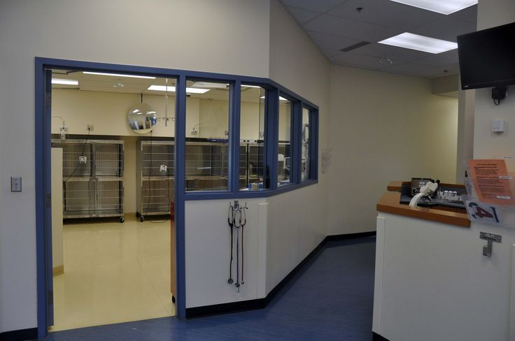 Looking into the I.C.U. from the laboratory & treatment areas