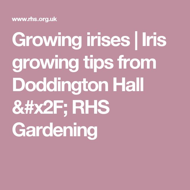 Growing irises | Iris growing tips from Doddington Hall / RHS Gardening