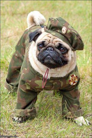 Pug Militar