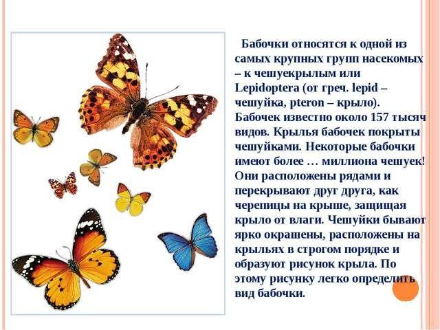 Конспект по биологии про бабочек