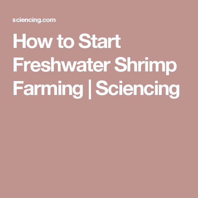 How to Start Freshwater Shrimp Farming | Sciencing