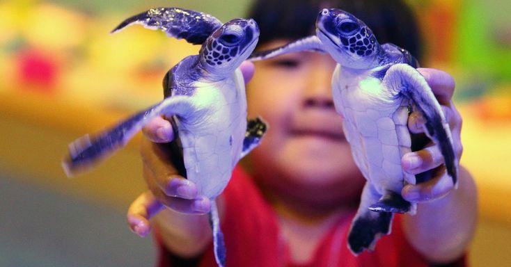 Criança brinca com tartarugas em aquário de Pequim, na China