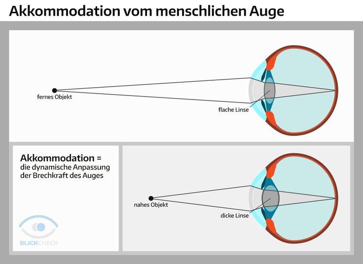 Die Akkommodation vom menschlichen Auge.