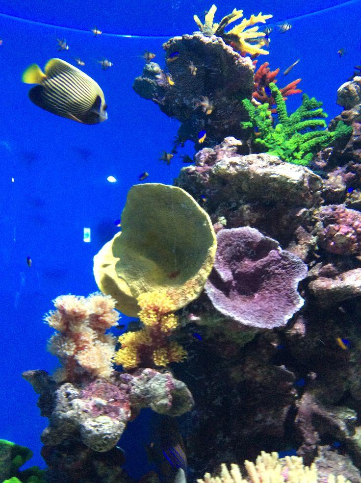 산호초와 열대어