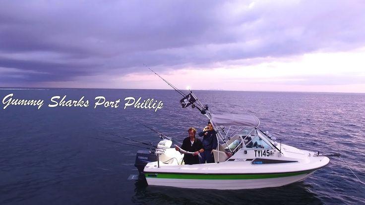 Summer Fishing  Snapper  Gummy Sharks Melbourne Port Phillip Bay with Spots