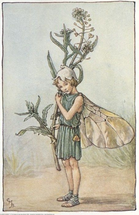 Cicely Mary Barker - Flower Fairies of the Winter