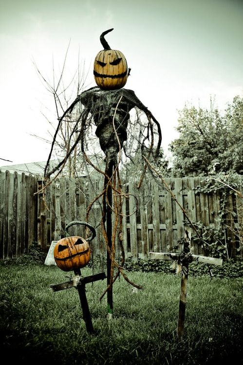 photo inspiration for scarecrowpumpkin patch - Halloween Scare Crow