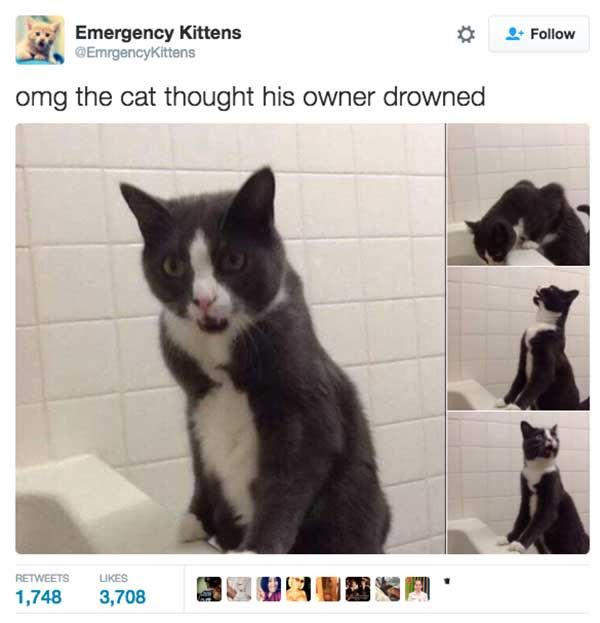 Best Animals Images On Pinterest - The 27 funniest tweets about cats in 2016