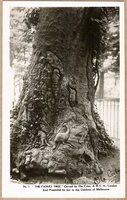 Vintage real photo postcard of The Fairies Tree in Fitzroy Gardens in Melbourne, Victoria, Australia.