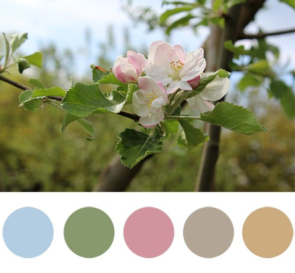 Almavirág - tavaszi pasztell színnpaletta