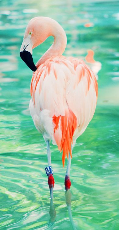 id-rather-be-free:    flamingo vertical (by Charlotte2lost)