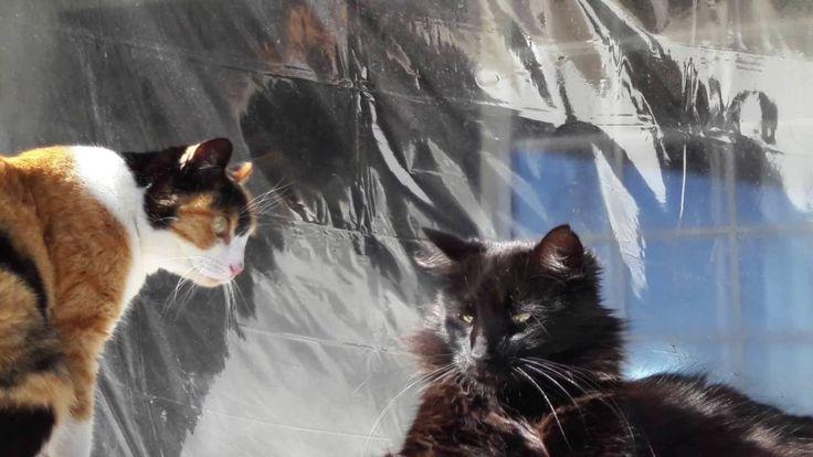 Gatos y Gatos 2