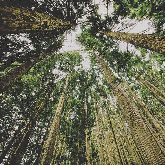 Reposting @imenadi_official: 🍀Giovedì nuovo episodio di come nasce un album su YouTube #forestanera #forestal #foresta #imenadi #comenasceunalbum #music #instagood #summer #picoftheday #followme #gogogo #travel #sun #newalbum #musica #indiefilm #filmmaker #webserie #nature #love #instagram #estate #sky #italia #sole #photography