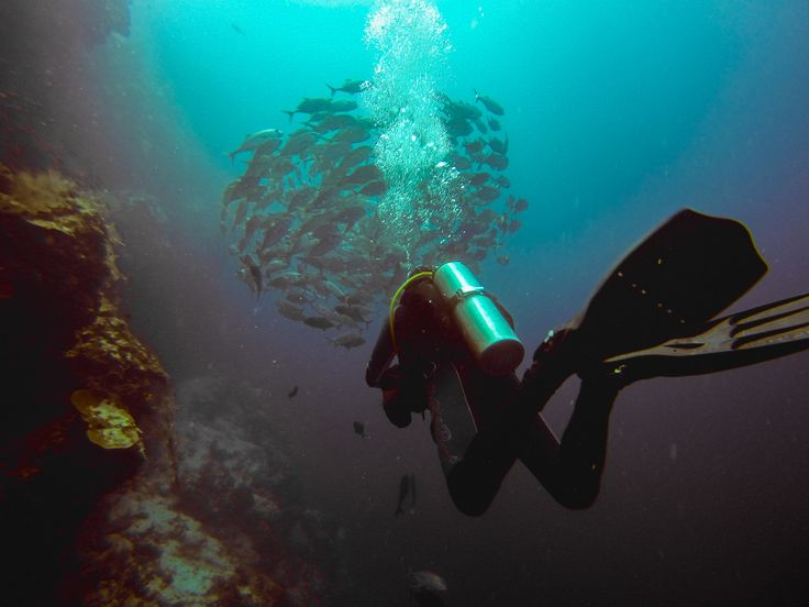 Here are 9 facts about #nitrox #diving #UnderTheSea: