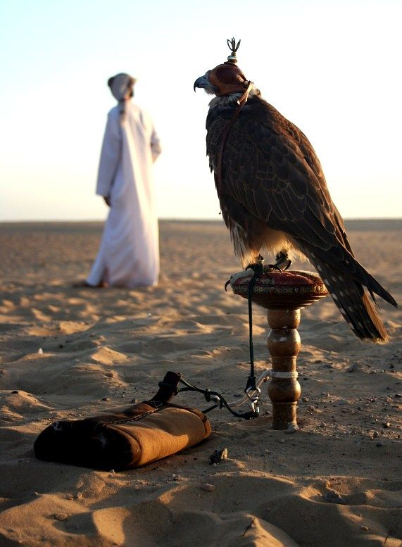 An Arab Man with his Falcon in the Desert  Dubai | Falconry