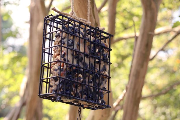 Feed the Birds: How to Make Your Own Suet Cakes | Made + Remade