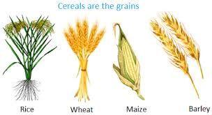 cereals - Google 搜尋