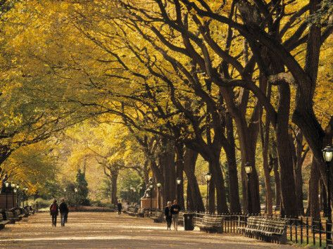 Central Park, New York City, Ny, USA Photographic Print by Walter Bibikow at AllPosters.com