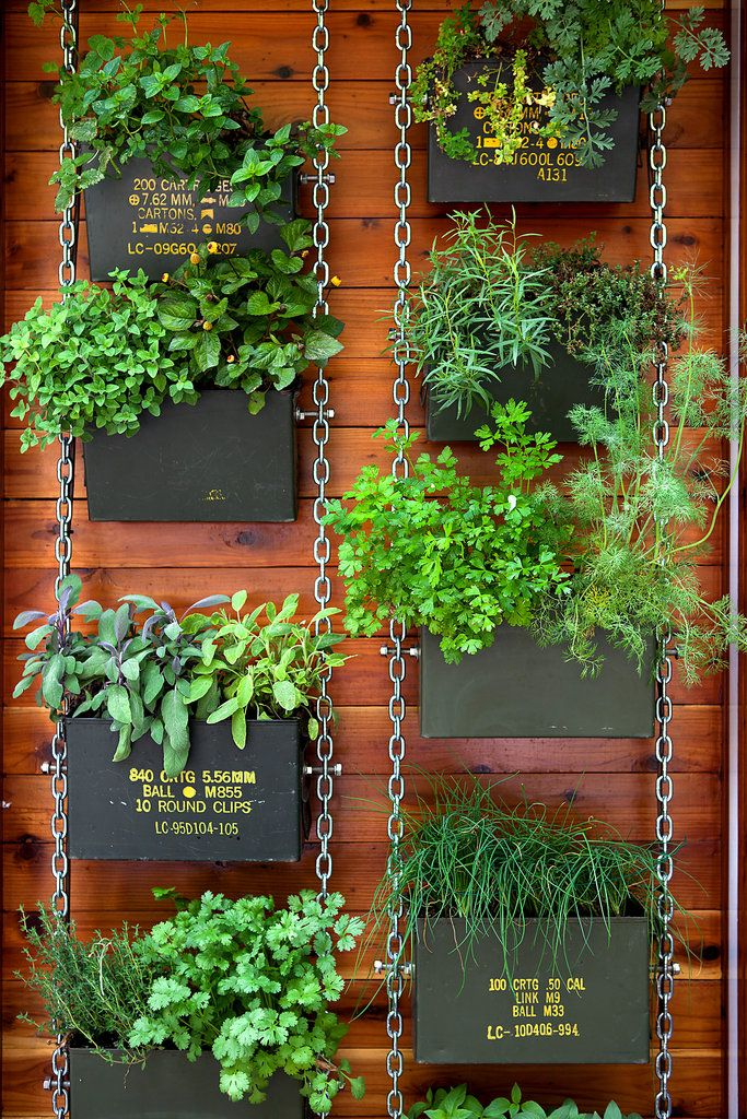 wall containers made from ammo cans contain fresh herbs.