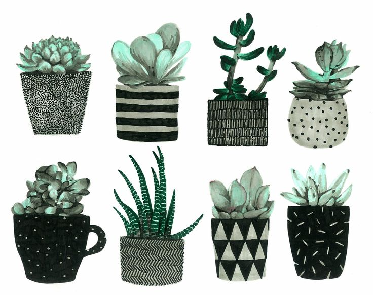 Succulents. Illustration by Tereza Basarova