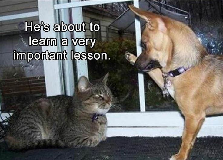 Funny Memes Clean Animals : Best funny animals images funny animals funny