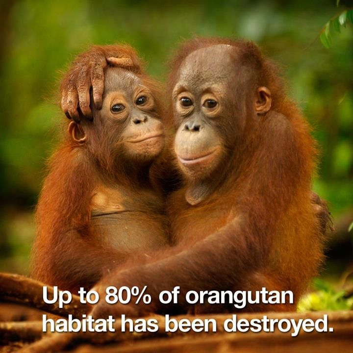 about Primates on ...