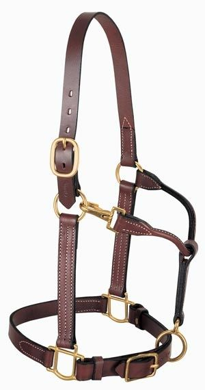 All Purpose Halter, #Horse