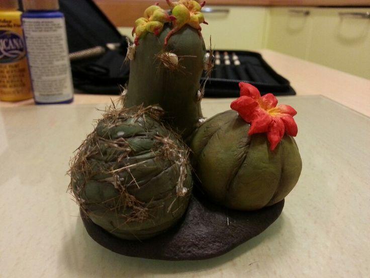 Cactus in porcellana fredda