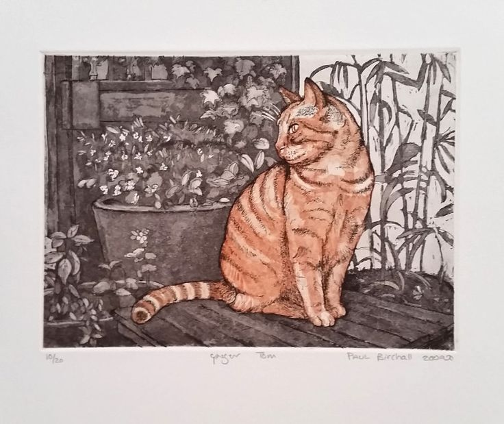 "Rust-en-Vrede Gallery – ART EXCHANGE: MEXICO - Participating SA Artist Paul Birchall ""Ginger Tom"" Etching with Aquatint"