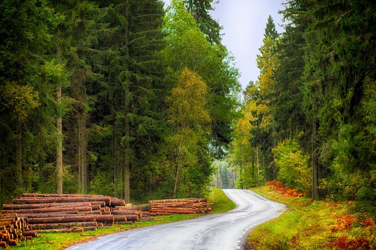Autumn in Sweden by Sebastian Rudnicki on 500px