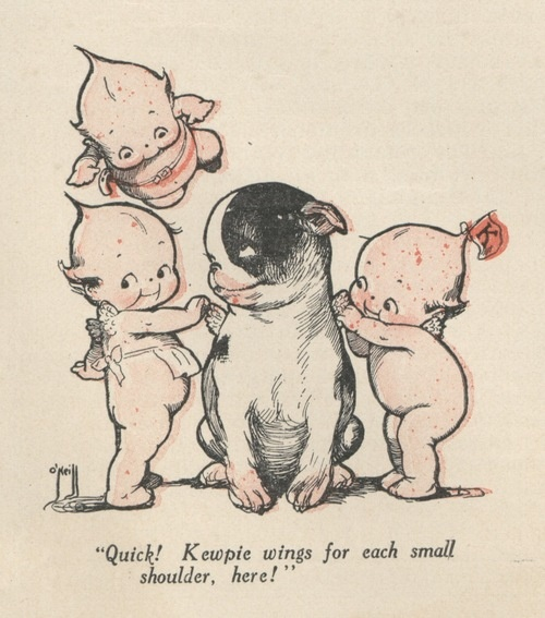 kewpies with a black and white french bulldog...