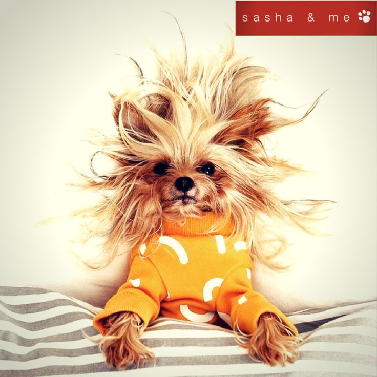 #luxury dog beds australia, #designer dog beds, #luxury dog beds, #designer dog beds australia, #stylish dog beds, #designer dog accessories australia, #luxury pet beds, #designer dog bed, #best dog beds, #designer dog accessories, #boutique dog beds, #luxury dog bed, #trendy dog beds, #organic dog bed, #luxury dog beds online, #dog beds australia, #large luxury dog beds, #designer pet accessories, #dog pod beds, #dog accessories australia, #dog blankets australia, #designer cat bed…