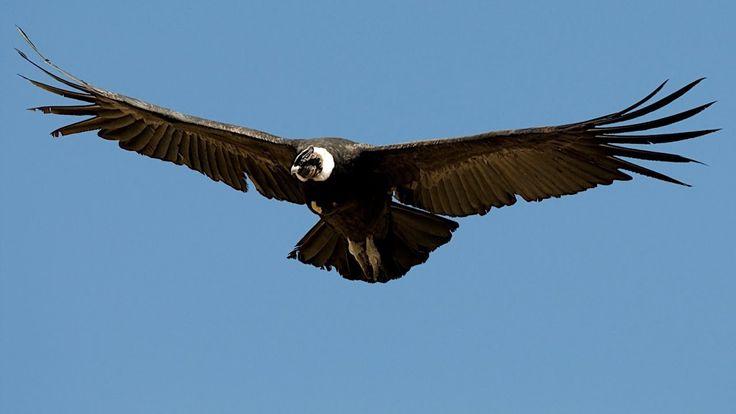 Características de  las Aves Grandes - TvAgro por Juan Gonzalo Angel