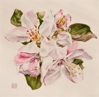 Botanical illustration courses at Denver Botanical Garden